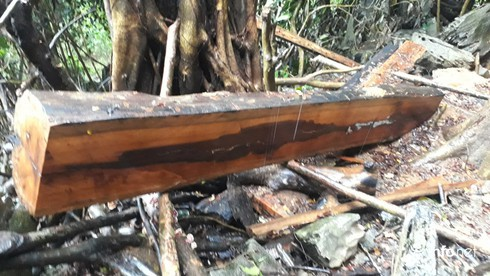 Hàng loạt cây gỗ lớn vùng lõi Khu bảo tồn Pù Luông bị chặt hạ để lấy... phong lan - Ảnh 10.