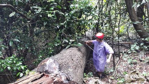 Hàng loạt cây gỗ lớn vùng lõi Khu bảo tồn Pù Luông bị chặt hạ để lấy... phong lan - Ảnh 2.