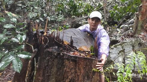 Hàng loạt cây gỗ lớn vùng lõi Khu bảo tồn Pù Luông bị chặt hạ để lấy... phong lan - Ảnh 3.