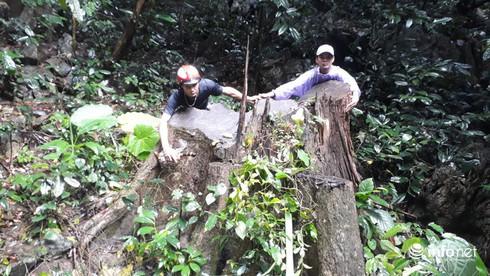 Hàng loạt cây gỗ lớn vùng lõi Khu bảo tồn Pù Luông bị chặt hạ để lấy... phong lan - Ảnh 4.