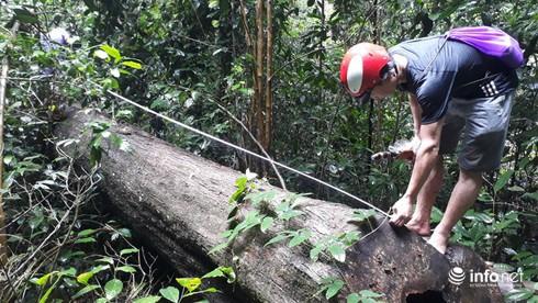 Hàng loạt cây gỗ lớn vùng lõi Khu bảo tồn Pù Luông bị chặt hạ để lấy... phong lan - Ảnh 5.