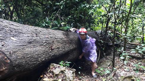 Hàng loạt cây gỗ lớn vùng lõi Khu bảo tồn Pù Luông bị chặt hạ để lấy... phong lan - Ảnh 9.