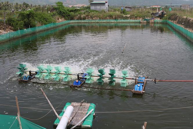Trung Quốc ngừng mua, giá ốc hương giảm sâu suốt 6 tháng - Ảnh 3.