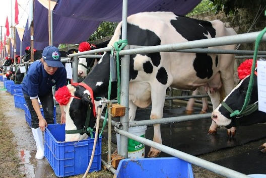 Mộc Châu Milk tạo chất lượng sữa tốt đến người tiêu dùng