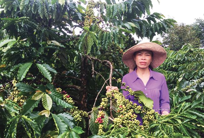 Áp dụng phương thức canh tác theo hướng hữu cơ, chị Thanh không chỉ nâng cao sức khỏe mà còn giúp đưa ra thị trường sản phẩm nông nghiệp an toàn...