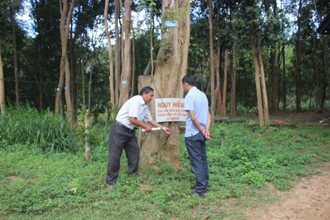 Khu vực nghiêm cấm mọi đối tượng ra vào rừng rừng gỗ trắc.