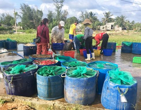Cá lóc có giá bán từ 45.000-50.000 đồng/kg, nhờ đó kinh tế nhiều hộ dân đã thoát nghèo, vươn lên làm giàu.