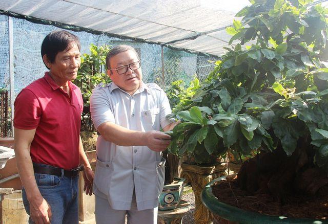 Chủ tịch Hội Nông dân Việt Nam Thào Xuân Sùng thăm vườn mai sạch của ông Nguyễn Trí Tuấn ở xã Nhơn An.