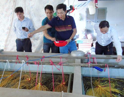 Mô hình nuôi lươn giống xuất khẩu sang Nhật Bản và Hàn Quốc của anh Nguyễn Thanh Tân - Nông dân Việt Nam xuất sắc 2019 đến từ tỉnh Vĩnh Long. Ảnh: Hồng Cẩm