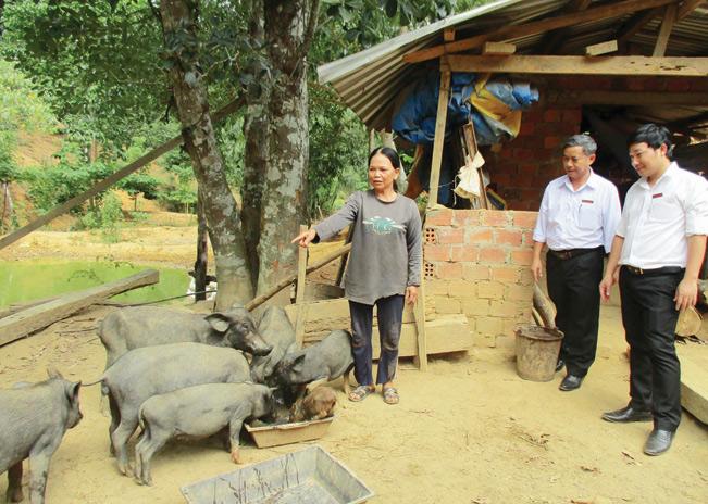 Nhờ nguồn vốn Agribank đã giúp cho hàng trăm hộ dân người đồng bào dân tộc thiểu số  huyện Phước Sơn xây dựng được các mô hình chăn nuôi, trồng trọt từ đó vươn lên thoát nghèo.