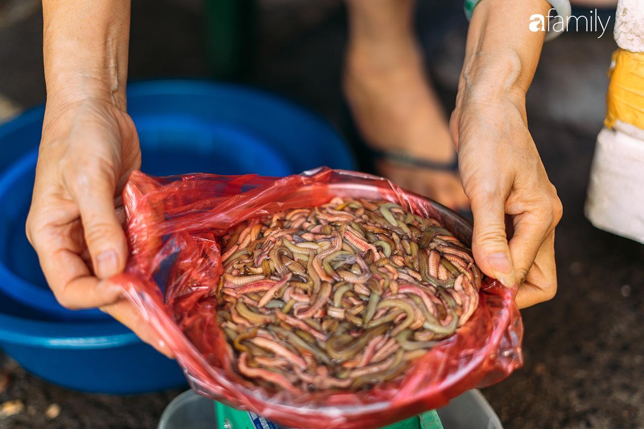 Rươi - báu vật ruộng đồng và văn hóa đi ăn rươi đi mỗi khi lạnh trời của người Hà Nội - Ảnh 3.