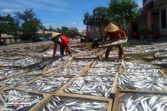Lao đao làng nghề hấp cá xuất khẩu - Ảnh 1.