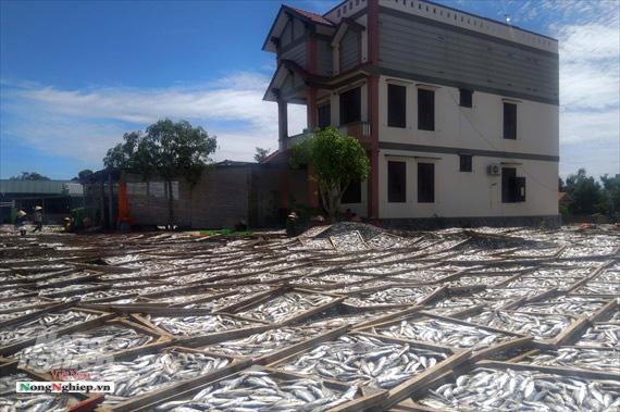 Lao đao làng nghề hấp cá xuất khẩu - Ảnh 2.