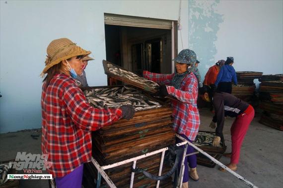 Lao đao làng nghề hấp cá xuất khẩu - Ảnh 3.