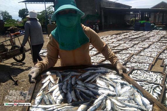 Lao đao làng nghề hấp cá xuất khẩu - Ảnh 5.