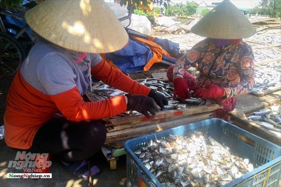 Lao đao làng nghề hấp cá xuất khẩu - Ảnh 6.