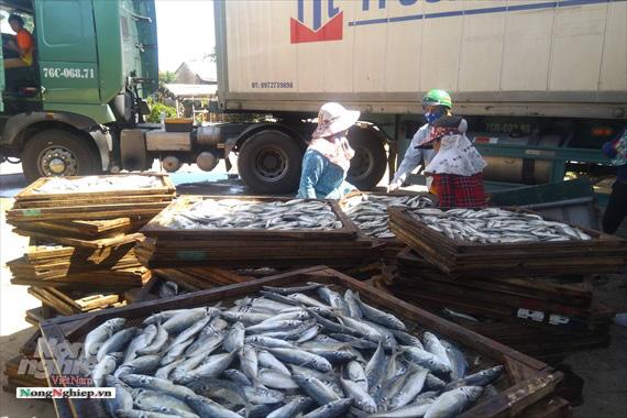 Lao đao làng nghề hấp cá xuất khẩu - Ảnh 7.