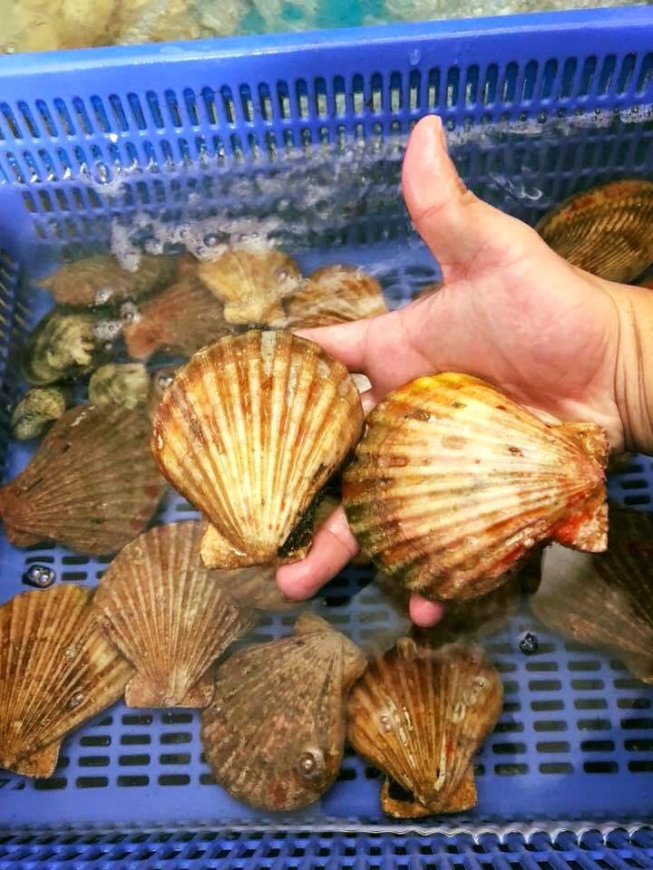 Loài điệp seo tỉnh Khánh Hòa vừa nhân giống, bán đắt như tôm hùm - Ảnh 2.