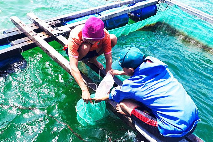 Loài điệp seo tỉnh Khánh Hòa vừa nhân giống, bán đắt như tôm hùm - Ảnh 1.