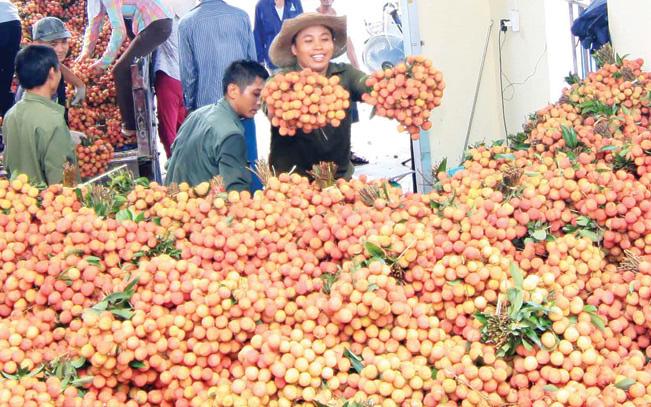 Xuất khẩu trái cây chính ngạch vẫn sang Trung Quốc thuận lợi
