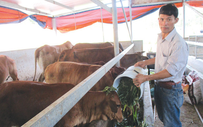 Có vốn Agribank, 7X đầu tư trang trại chăn nuôi, thu 2 tỷ/năm