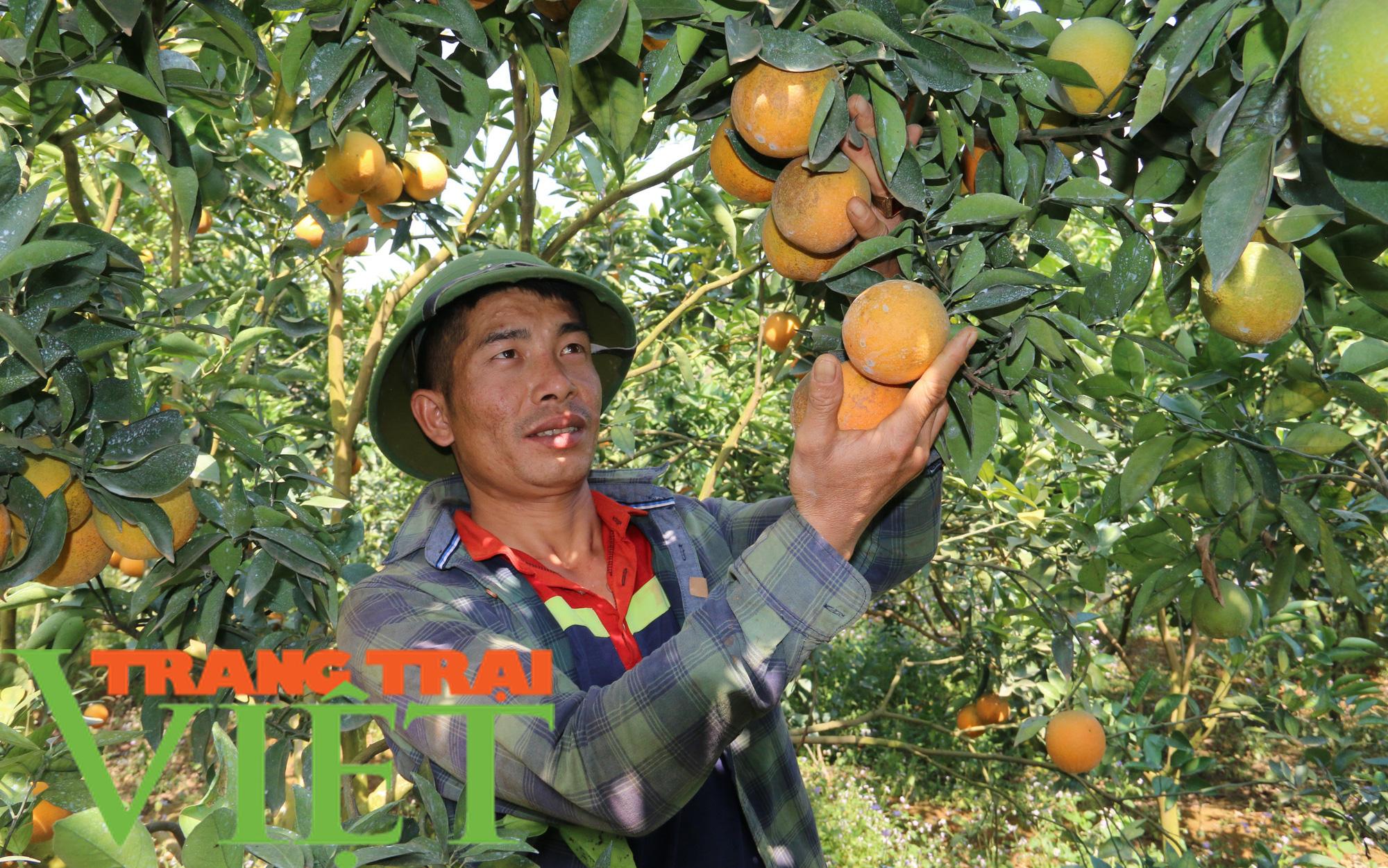 Hội Nông dân Sơn La hỗ trợ hội viên phát triển kinh tế