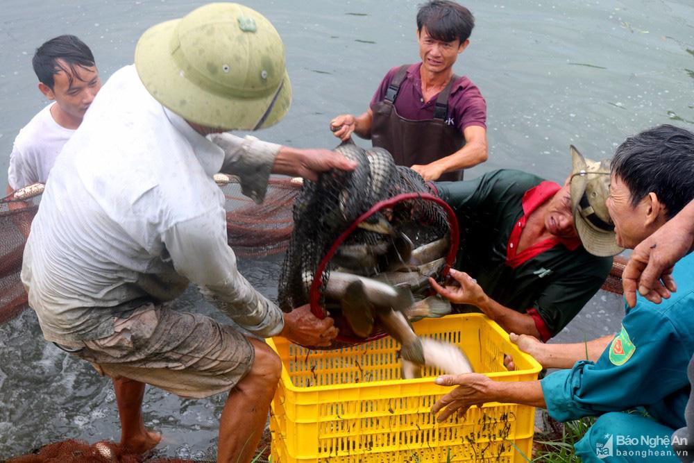 """""""Bí quyết"""" nuôi loài cá lóc mõm nhím chỉ trong 1,5 m nước, lãi hàng trăm triệu đồng/vụ - Ảnh 1."""