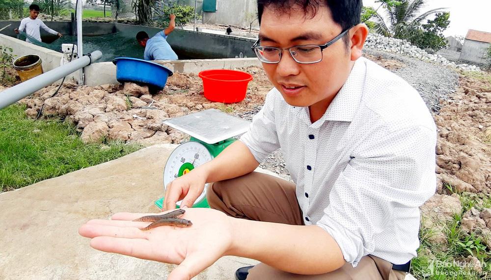 """""""Bí quyết"""" nuôi loài cá lóc mõm nhím chỉ trong 1,5 m nước, lãi hàng trăm triệu đồng/vụ - Ảnh 3."""