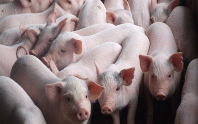 """Liệu thị trường thịt lợn tết có """"vỡ trận"""" như Trung Quốc? - Ảnh 1."""