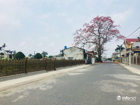 Nông thôn mới chú trọng cải tạo cảnh quan môi trường - Ảnh 1.