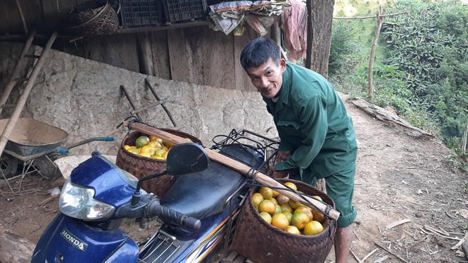 Một nông dân nhân thành công giống quýt ngọt bản địa quý hiếm - Ảnh 3.