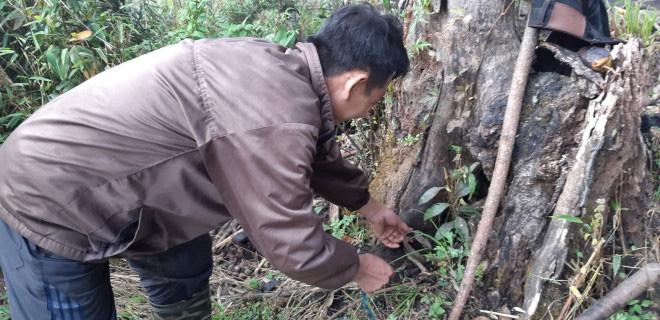 Chàng trai Mông bắt chuột rừng béo nung núc trên đỉnh Kỳ Quan San - Ảnh 1.