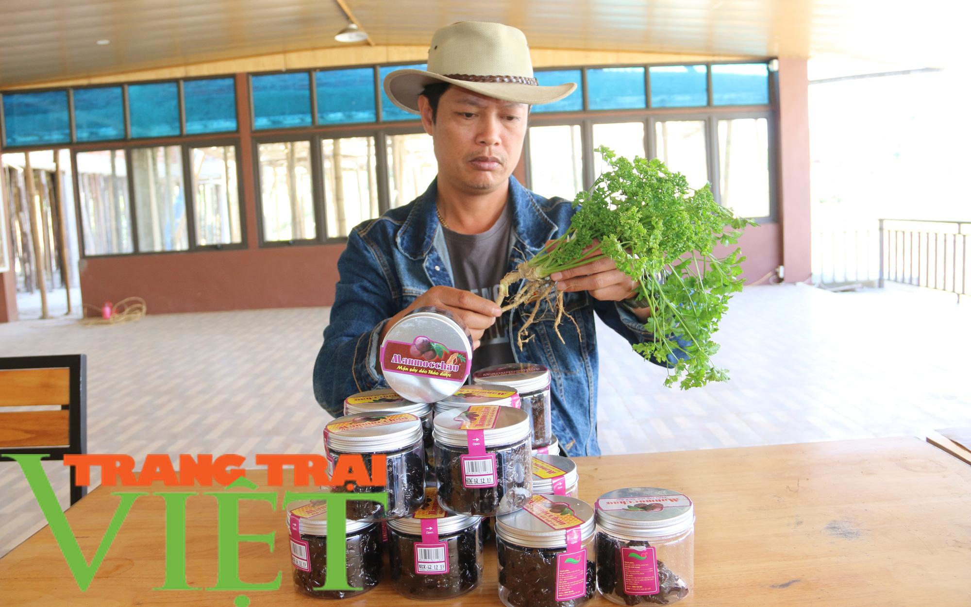 Mận sấy dẻo thảo dược, món quà vùng thảo nguyên xanh