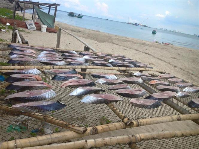 Băn khoăn đặc sản cá thu một nắng Đồ Sơn - Ảnh 1.