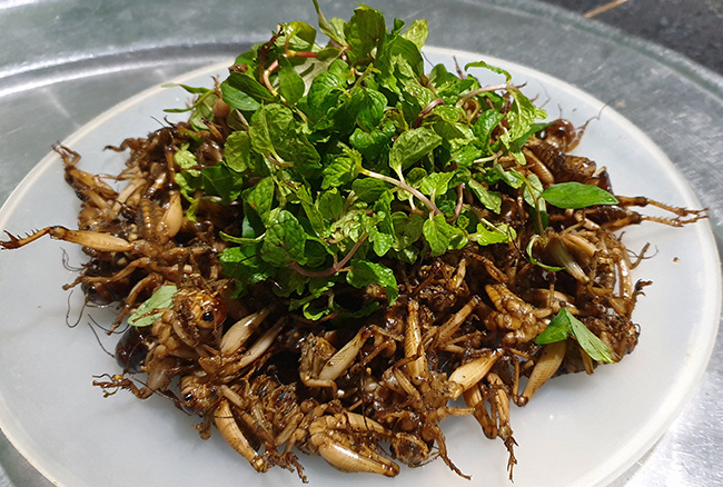 Mùa bắt dế cơm bán 1.200 đồng một con ở Quảng Nam - Ảnh 4.