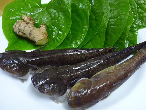 Món ăn thuốc từ cá bớp - Ảnh 1.