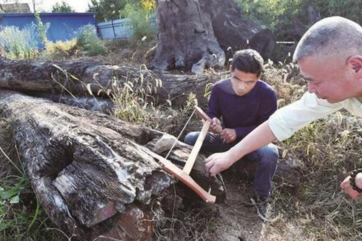 Ngỡ ngàng hơn 66 tỷ đồng khúc gỗ xấu xí vứt ngoài vườn, 5 năm sau mới biết là kho báu - Ảnh 1.