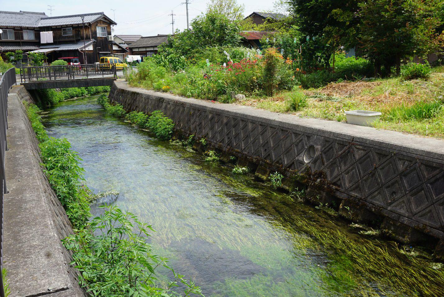 Ngôi làng có nước trong và sạch đến mức người dân rửa bát, vo gạo nấu cơm ngay ở kênh mương nuôi cá - Ảnh 1.