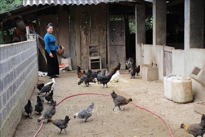 Khởi sắc nông thôn mới vùng cao Hát Lừu tỉnh Yên Bái - Ảnh 3.