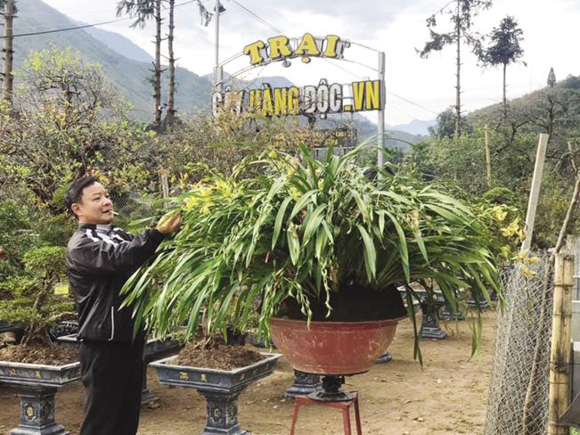 Ông Minh chăm sóc các chậu địa lan trần mộng trị giá hàng trăm triệu đồng/chậu.