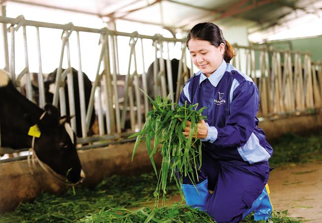 Trần Thị Thanh Thoan tự tay phối trộn thức ăn cho bò trong trang trại.