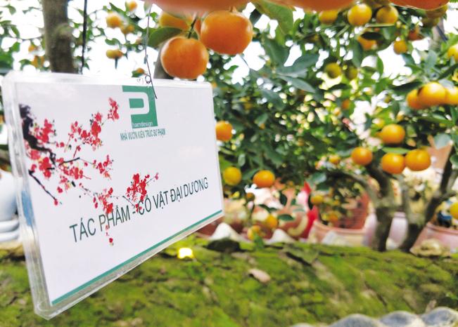 Các sản phẩm trong vườn đều được anh Hoàn đặt tên theo ý tưởng và ý nghĩa của cây.