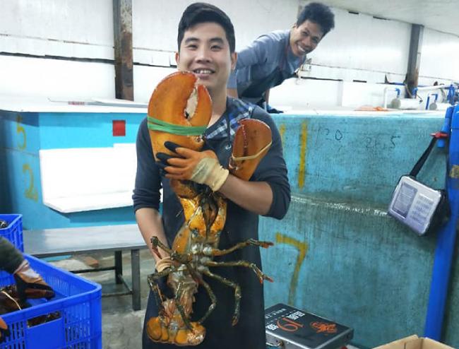 Anh Chiến, một đầu mối buôn tôm hùm sống ở Hà Nội, cho biết những con tôm này được nhập trực tiếp từ Canada. Mỗi con nặng từ 0,5-7kg.