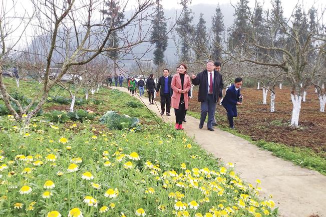 Khu vườn hoa rực rỡ ở trại của anh Thạch.