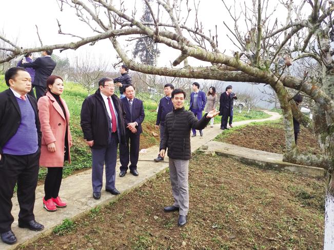 Anh Lương Quang Thạch giới thiệu về vườn cây giống đặc sản tại trại cho các khách và người dân đến thăm quan, học hỏi kinh nghiệm.