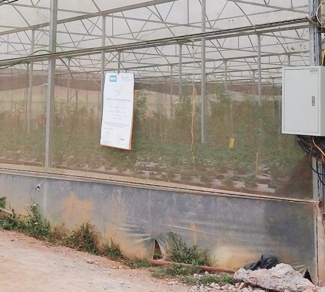 Khu vườn trồng rau, hoa trong nhà kính công nghệ cao.