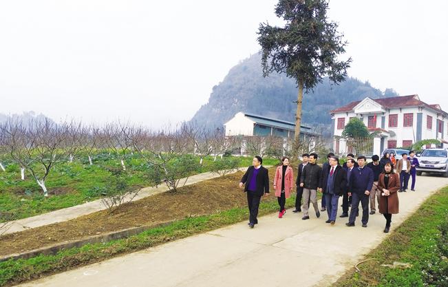 Toàn diện tích trại giống cây đặc sản công nghệ cao ở tỉnh vùng biên ải Lào Cai.