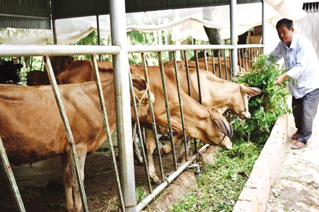Từ nguồn Quỹ HTND, Hội nông dân tỉnh Trà Vinh đã giúp hội viên ngày càng ổn định cuộc sống. Hồng Cẩm