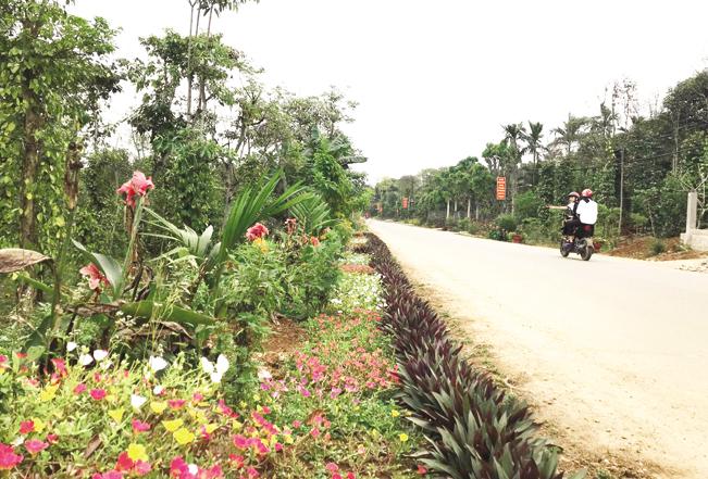 Đường quê ở huyện Cam Lộ rực rỡ hoa.
