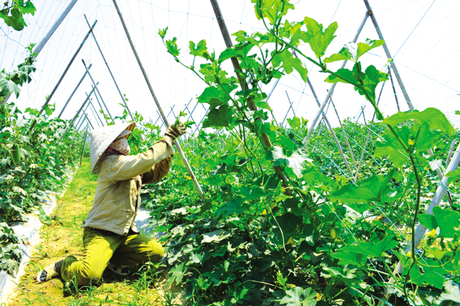 Người dân Đại Minh tăng gia sản xuất.